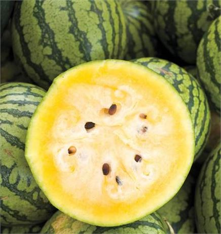 Yellow Doll Watermelon Seeds - Oval Striped Melons Beautiful Bright Yellow Flesh