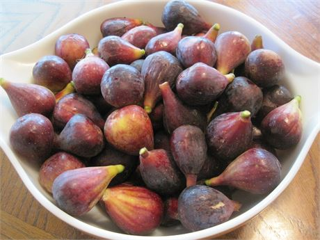 LSU Purple fig tree- 1 gallon