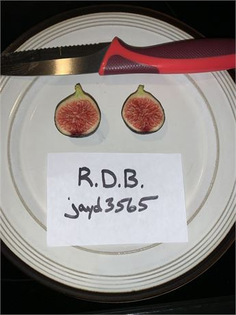 Ronde de Bordeaux (RDB) fig tree (own roots)