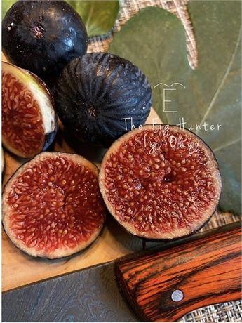 The Fig Hunter collection - TFH-0698- Igo Onyx