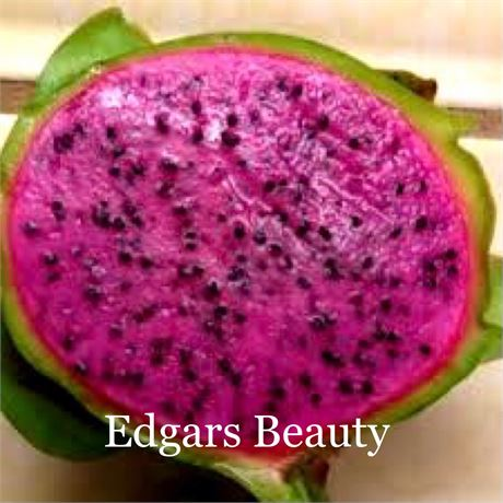 """Dragon Fruit """"Edgars Beauty"""" 2/$20 rooted cuttings"""