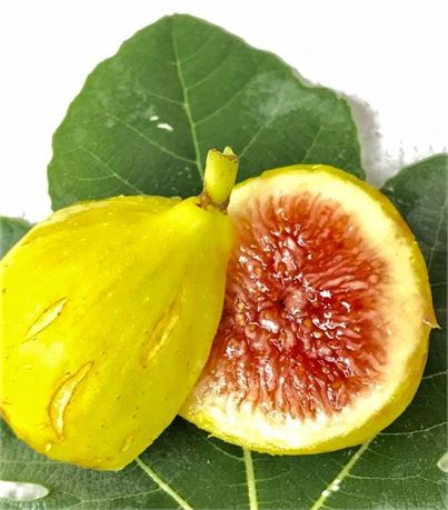 Jamal Al Asfar (JAA) - SUPER PREMIUM Fig Variety from the Middle East