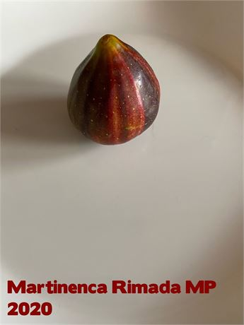 Fig Tree~FROM CUTTING~MARTINENCA RIMADA~MP SPAIN