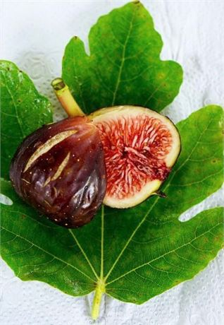 Joualle Noire - A Superior French fig variety