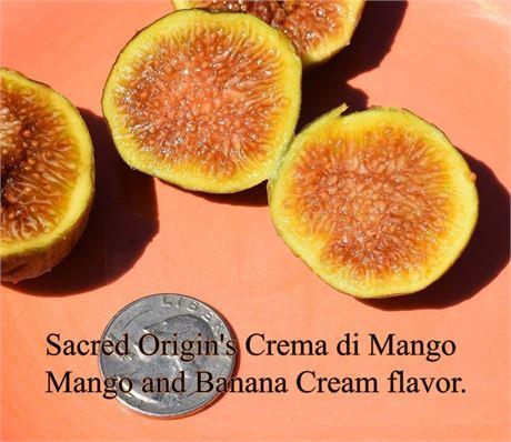 Creme Di Mango in 3x 9 tree pot  1 yr old **suprise gift cutting**