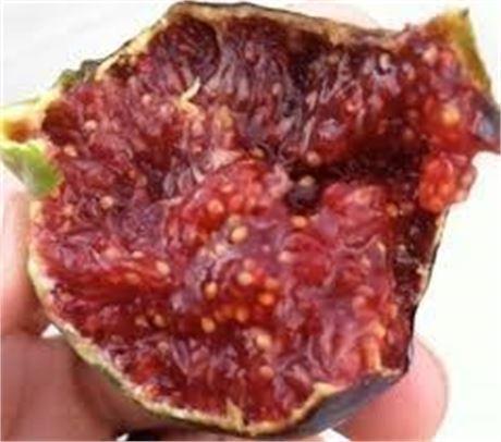 San Diego local fig tree sale- Many top Varieties- please read description