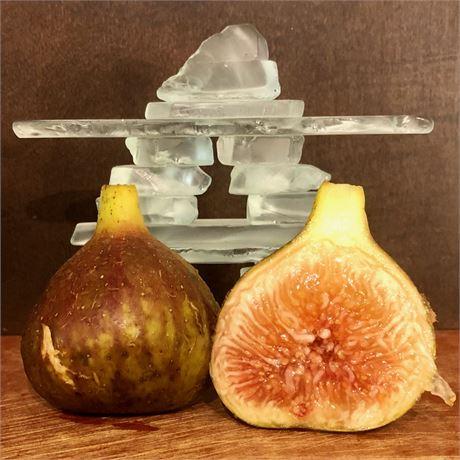 Mega Celeste - Well-Rooted Sucker in Fig Pop
