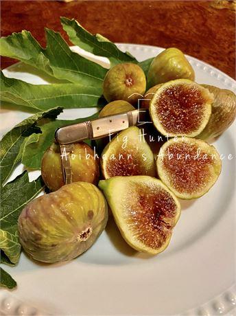 The Fig Hunter collection-TFH-0266- Aoibheann's Abundance