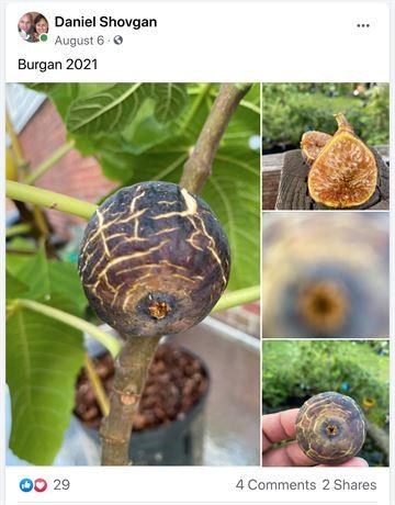 Burgan UNK